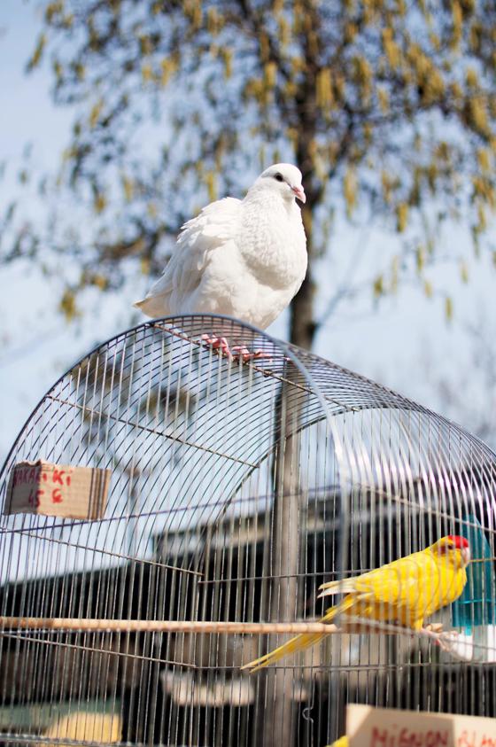 Fuglemarked-Quai aux Fleurs